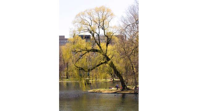 Public Garden in Spring 2_0619-3