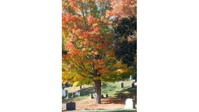 South Parish Cemetery, Andover , MA