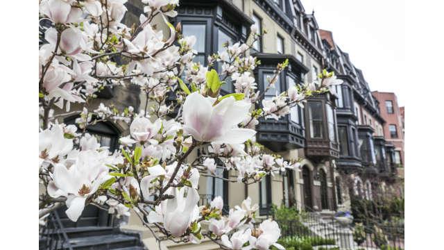 Spring Blooms - Back Bay