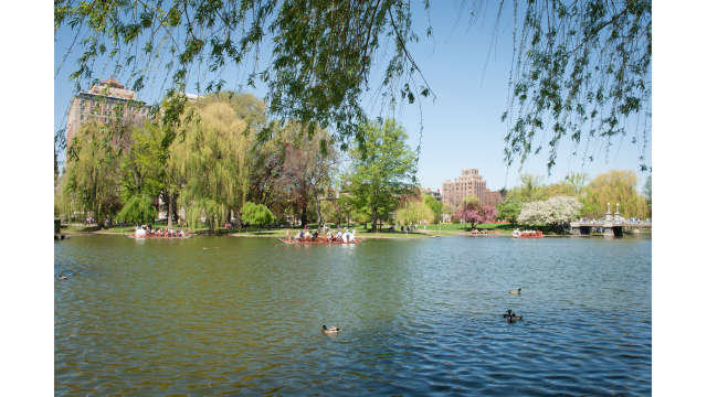 At the pond in the Public Garden