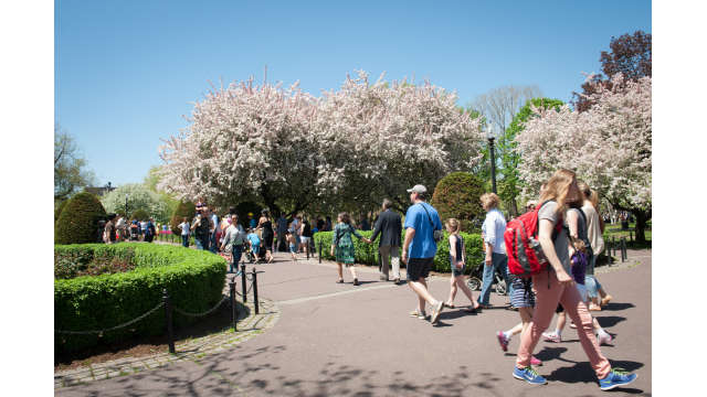 Visitors enjoy the Boston Public Garden