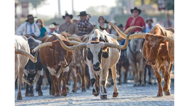 Historic Cattle Drive