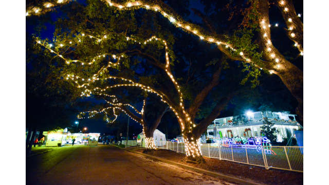 Christmas Under The Oaks.Lighted Oak Trees At Christmas Under The Oaks