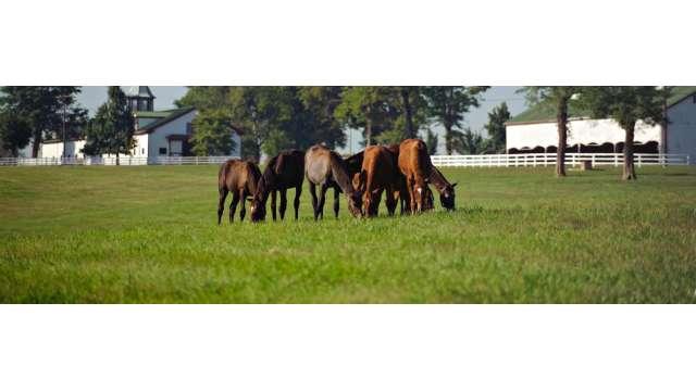 Lexington's Calumet Farm