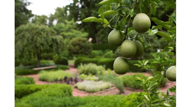 Gardens- Ashland, The Henry Clay Estate