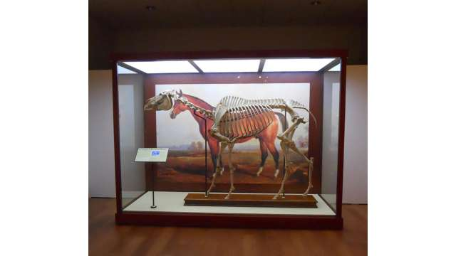 Lexington, the Horse