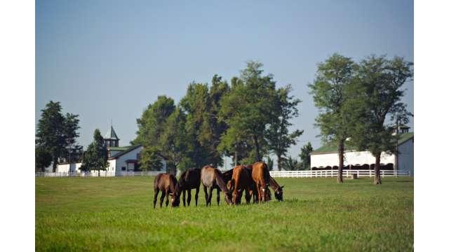 Horses at Calumet Farm