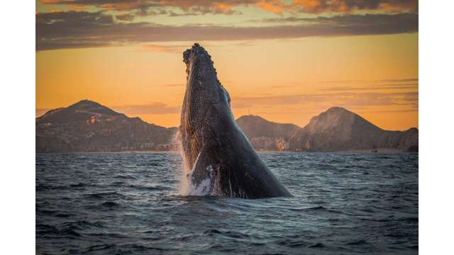 Whale-Watching-gallery