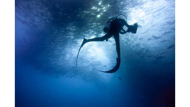 fish cabo pulmo