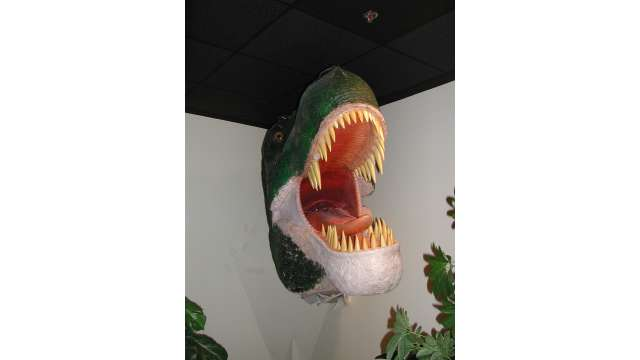 GCSU Museum of Natural History