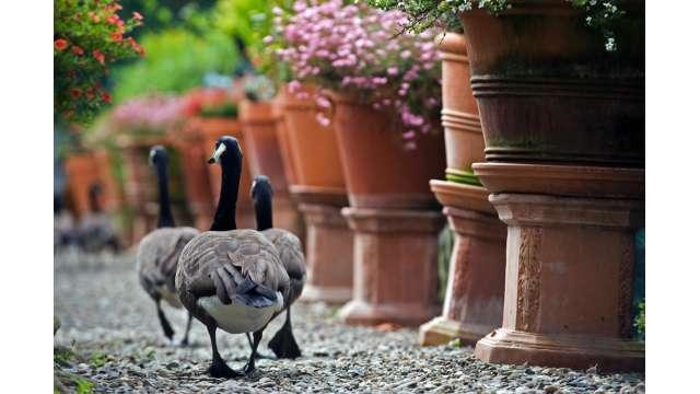 Berkshire Bird Paradise Sanctuary & Botanical Gardens 740