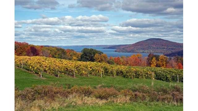 Vineyard along western shore of Canandaigua Lake