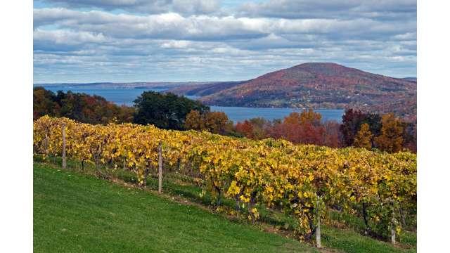 Vineyard along western shore of Canandaigua Lake 1041