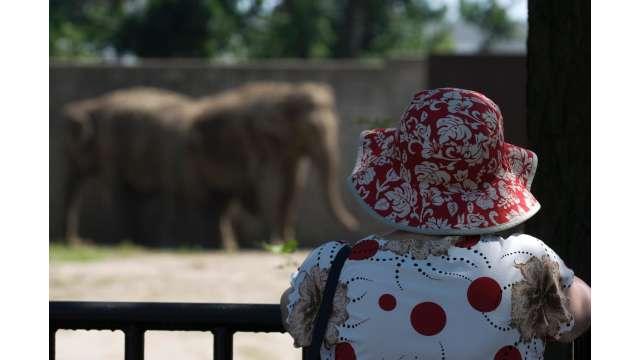 Buffalo Zoo 1095