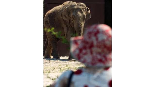 Buffalo Zoo 1096