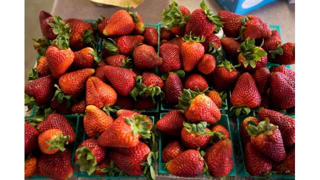 Salinger's Orchard Farm Market & Bakery