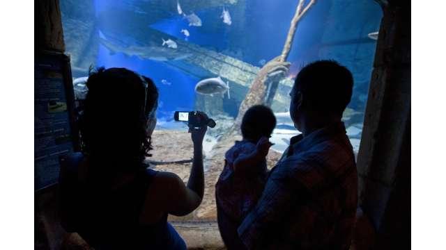 Atlantis Marine World Aquarium 1330