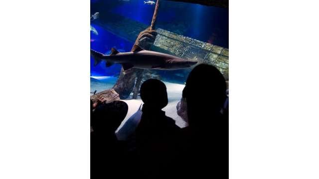 Atlantis Marine World Aquarium 1332