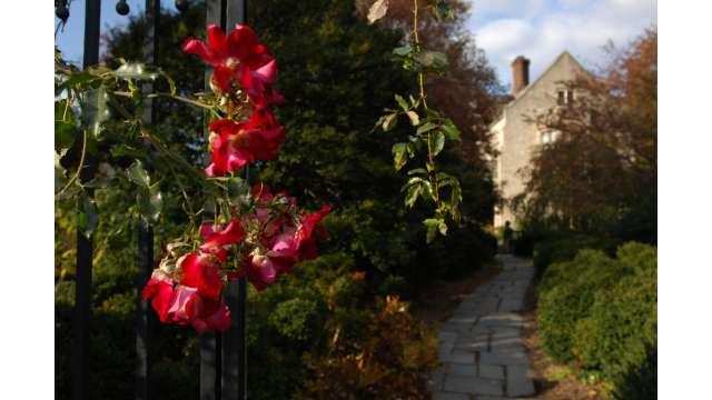 Planting Fields Arboretum & Coe Hall Mansion State Historic Park 1415