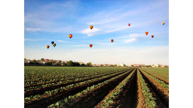 Farm field hot air balloons above