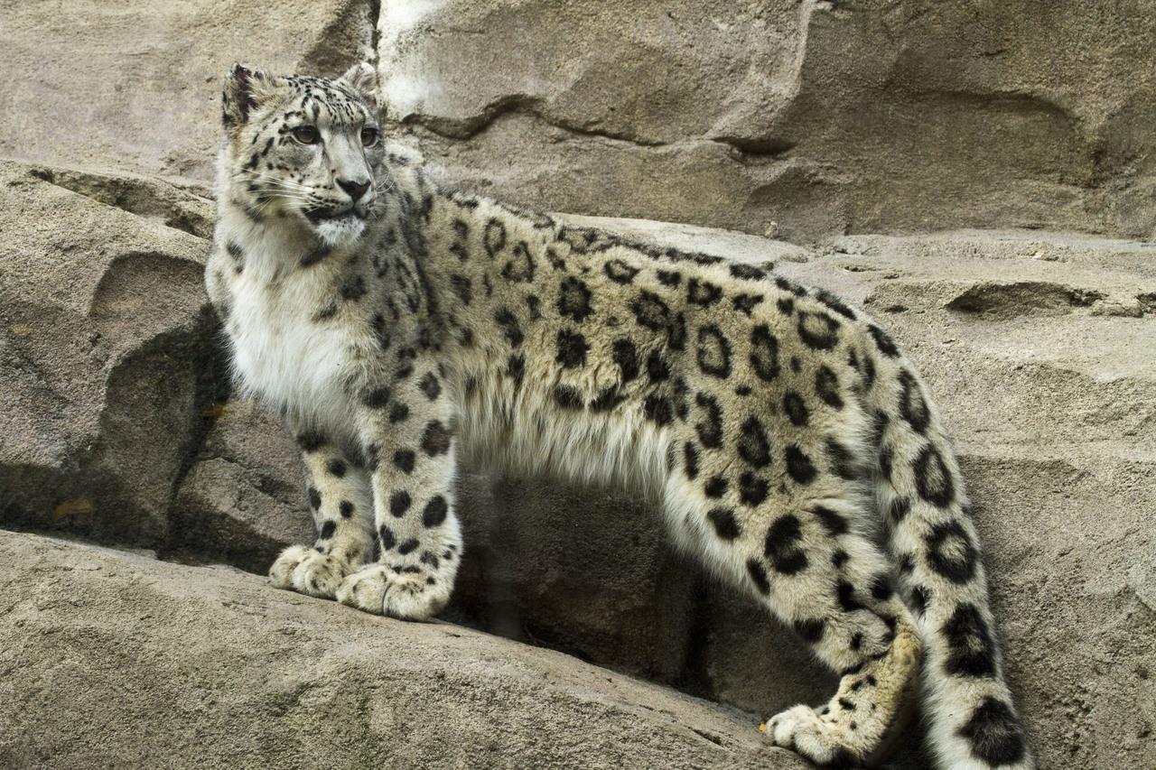 cheetah in gujarati