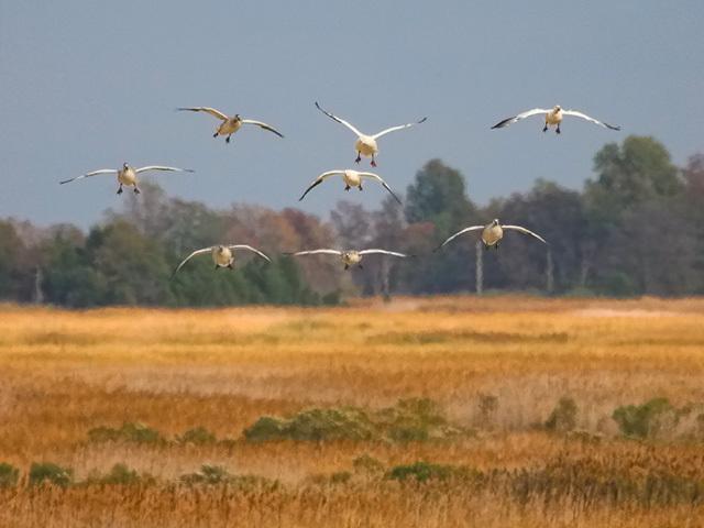 Woodland Beach Wildlife Area