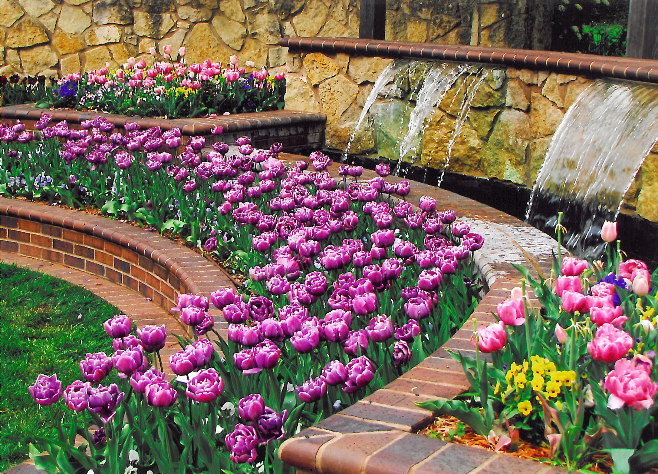 kansas orchid society annual fall show | wichita, ks 67203