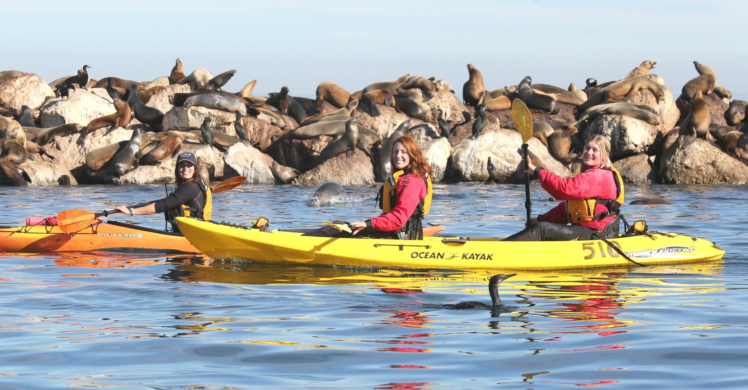 Kayaking in Monterey | Monterey Bay & Elkhorn Slough
