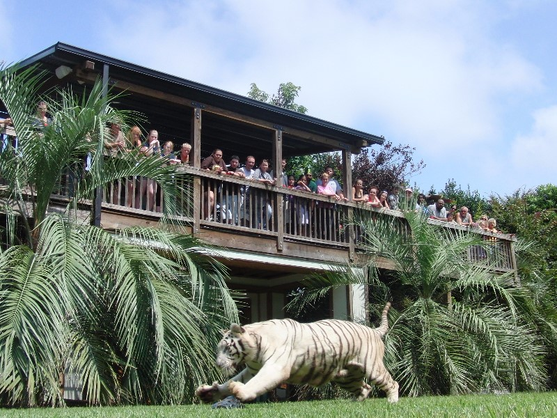 T I G E R S  Save $20 Off Per Person Wild Encounters Tour
