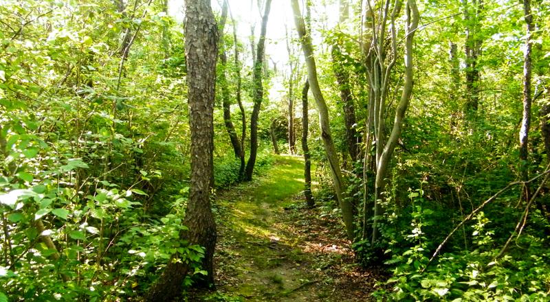 Ballard Park   Newport, RI   Discover Newport