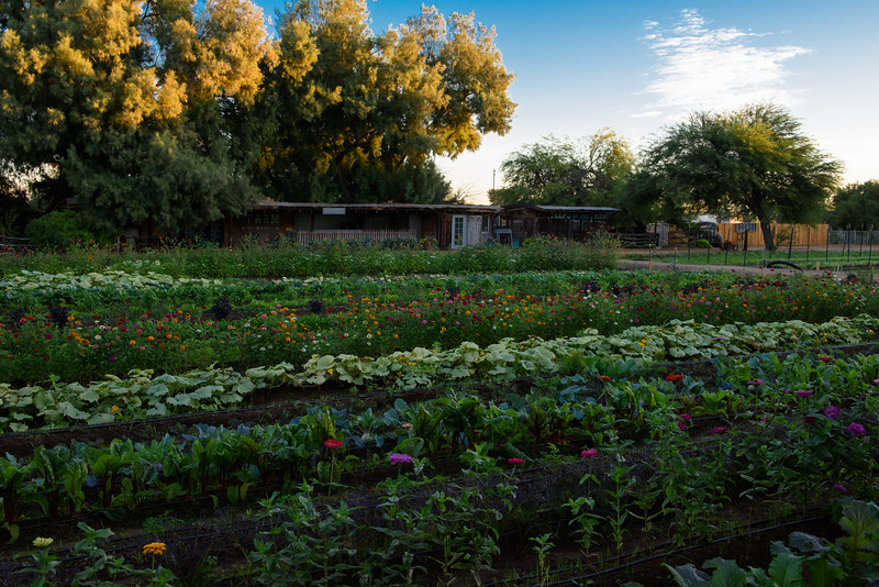 The Farm At South Mountain Phoenix Az 85042