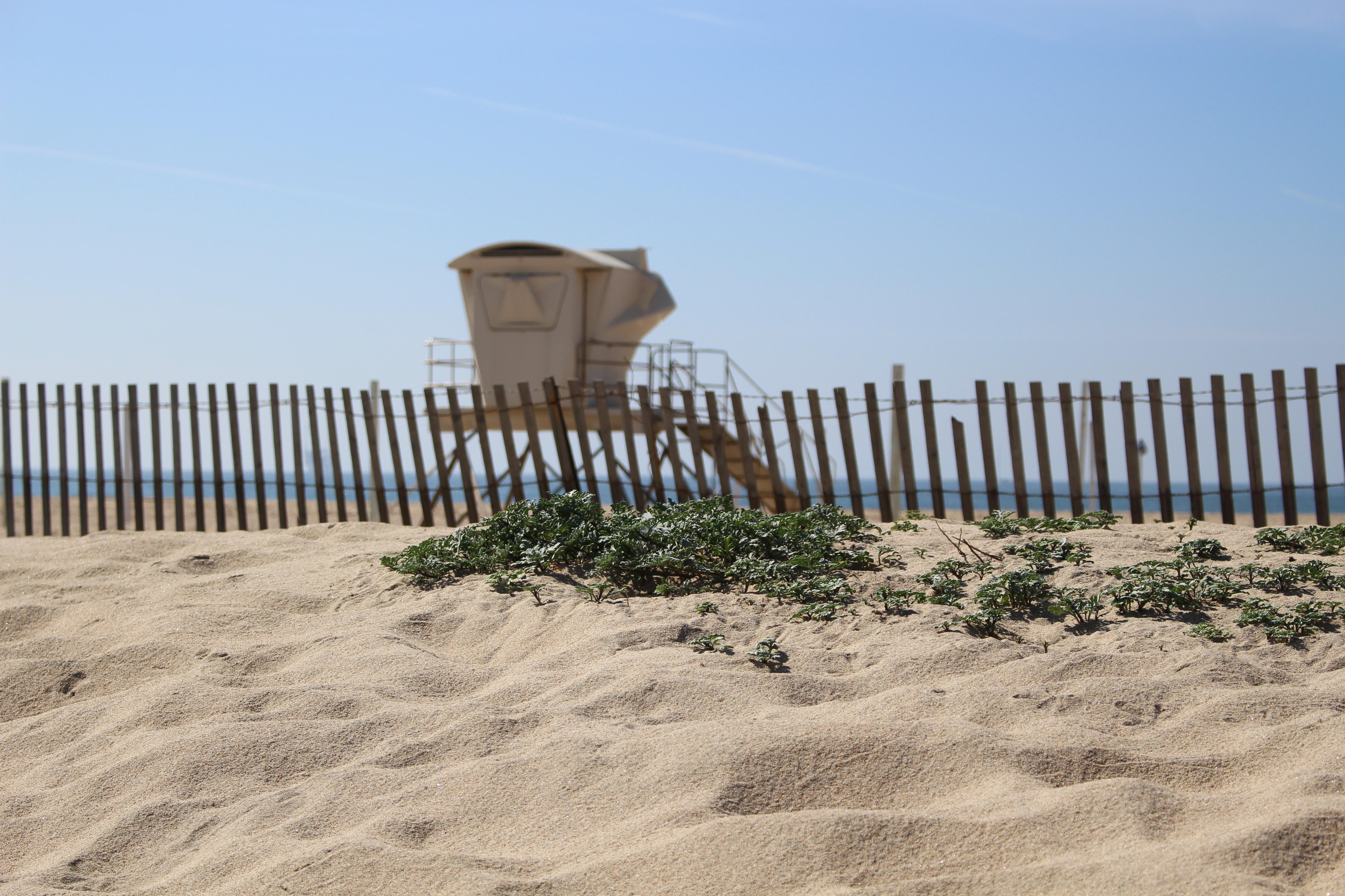 Bolsa Chica State Beach RV Camping
