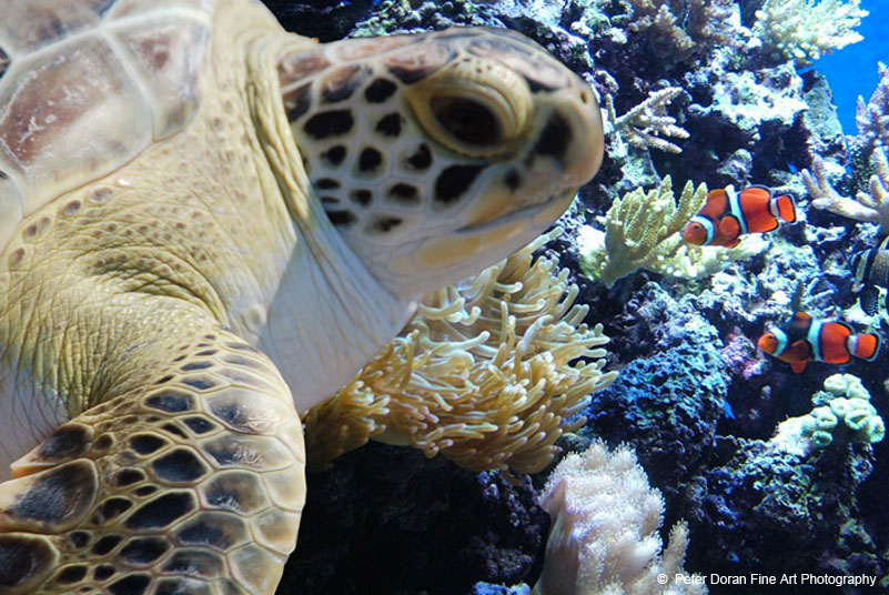 Image result for fort fisher aquarium