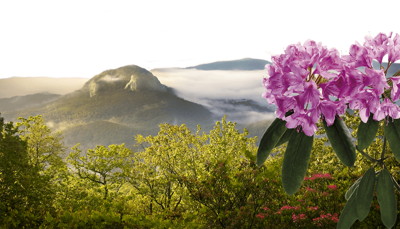 Mountains and Rhododendrons