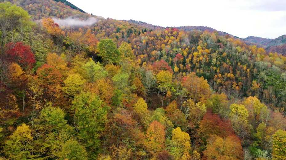 Aerial Views of Fall Color Near Asheville, NC