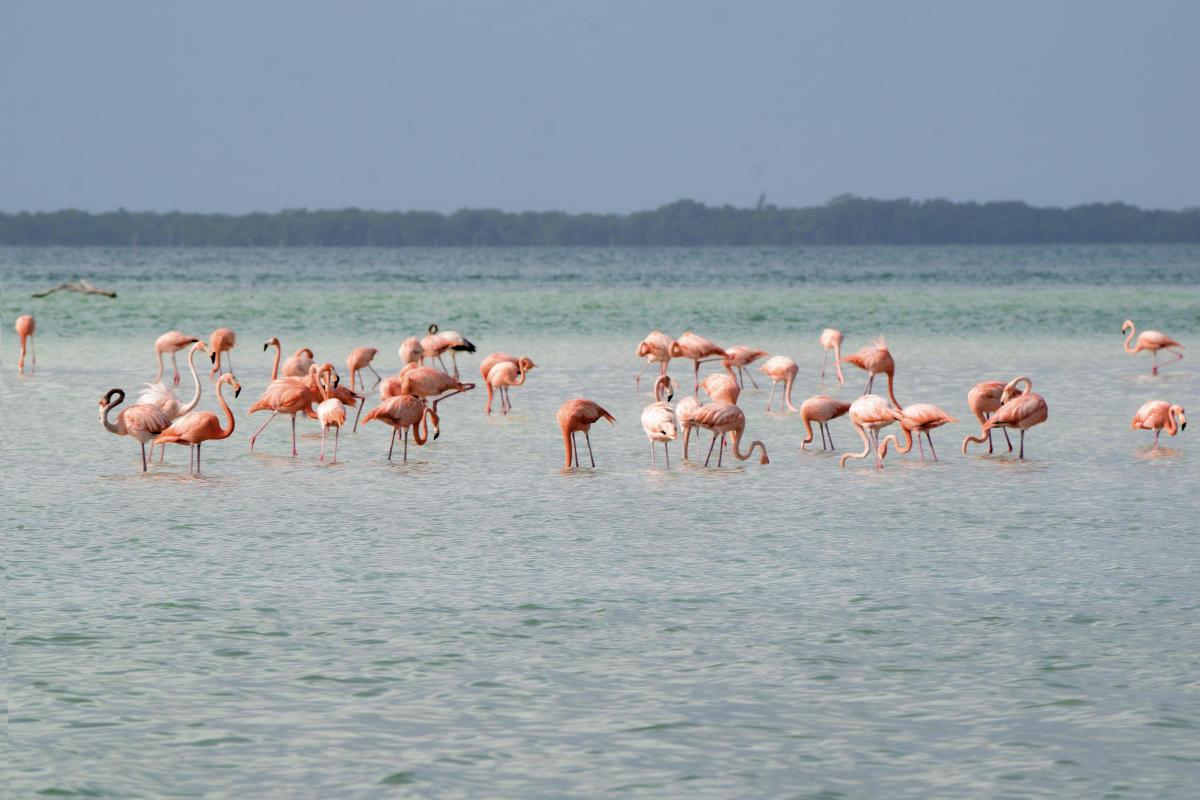 Flamingos en el mar