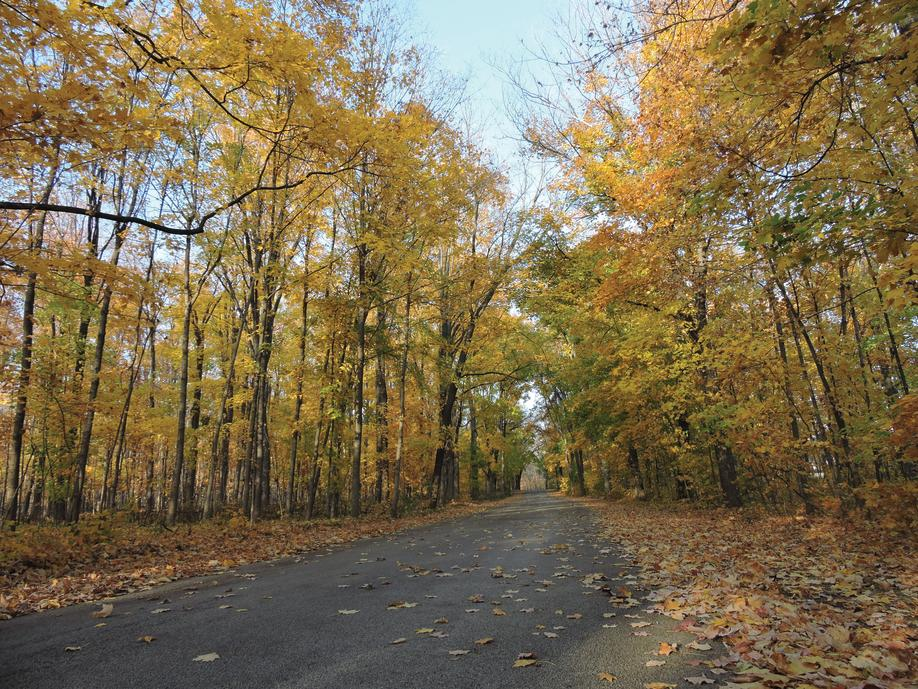 Visit Forest Preserves of Winnebago County for Fall Colors