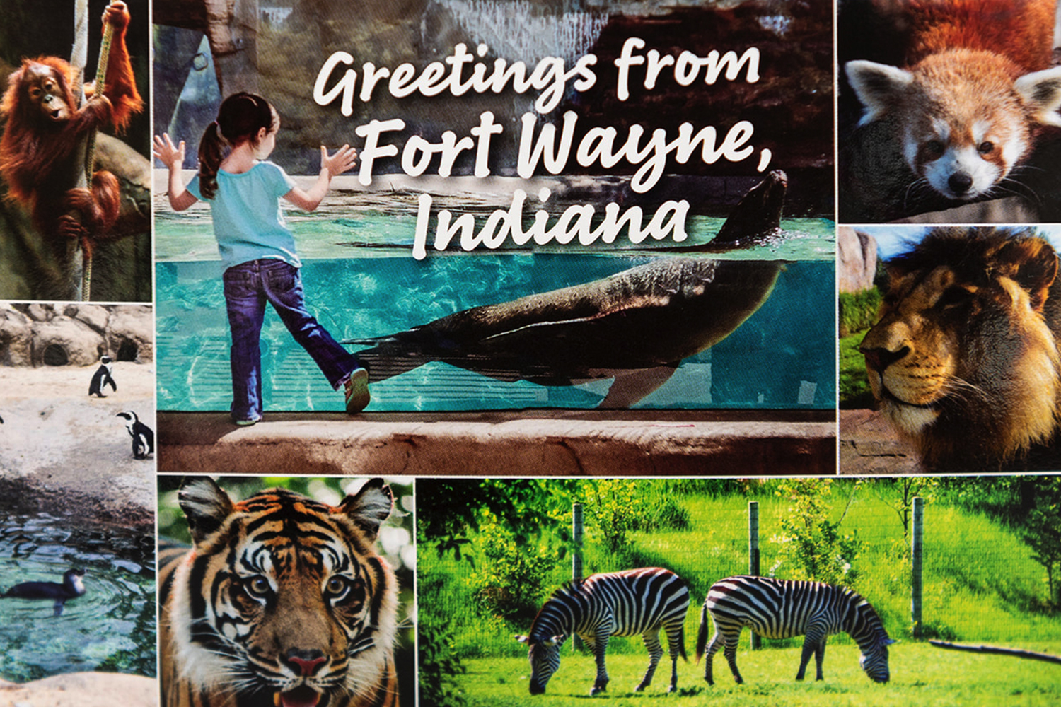 Zoo Collage Postcard