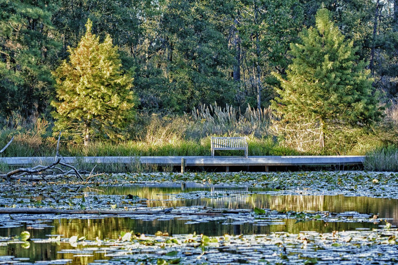 Houston Arboretum Meadow Pond