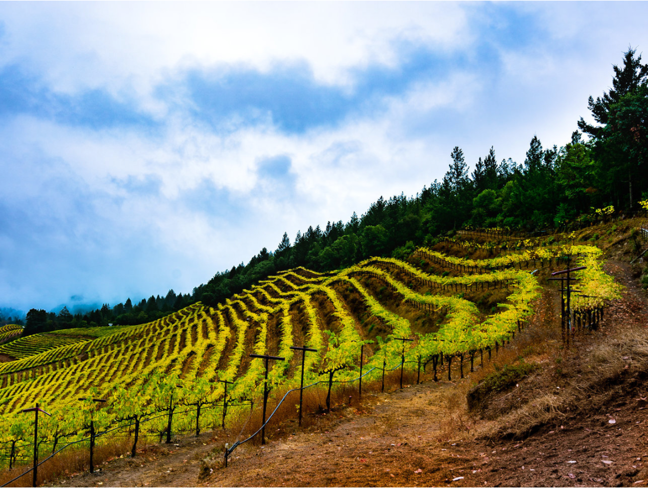Mindful Photography Workshops in Napa Valley