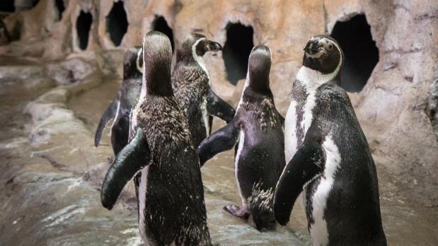 Penguin Coast- Aquarium Niagara