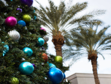 Christmas Tree in Palm Springs