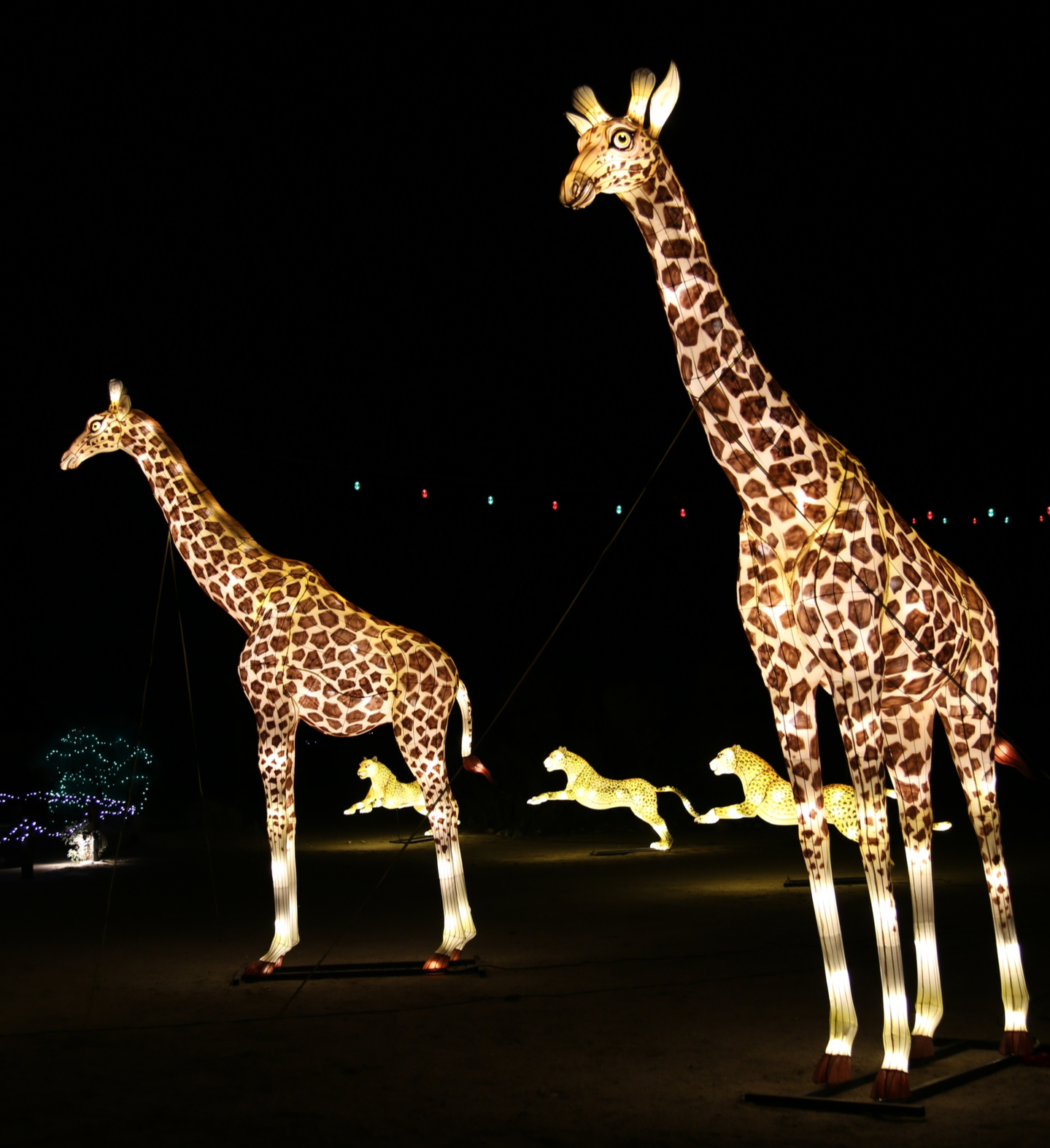 Light up giraffes at The Living Desert