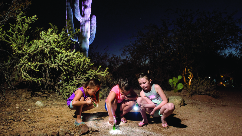 Flashlight Tours at Desert Botanical Garden