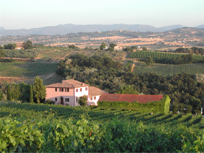 Rich in History, Organically Grown, the Authentic Antonelli San Marco Wines!