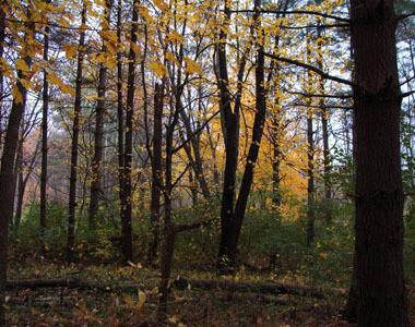 Indian Creek Fall