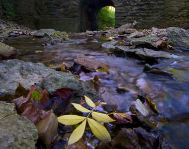Rentschler Park Leaf