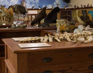 Robert A. Hefner Museum of Natural History Room