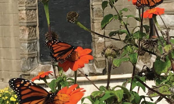 Butterfly Day at Bannerman Island