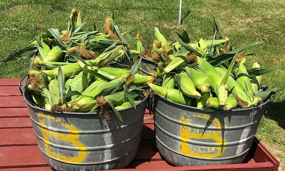2019 Sweet Summer Corn Dinner co-hosted by McKinney & Doyle and Dykeman Farms